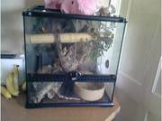 sale or swap boa constrictor and set up